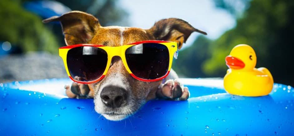 Up close photo of dog in sunglasses